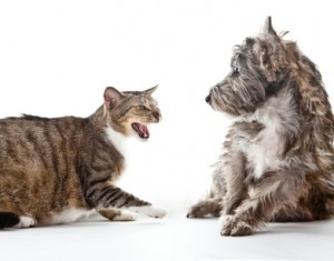 Cat hissing with dog backing away from it