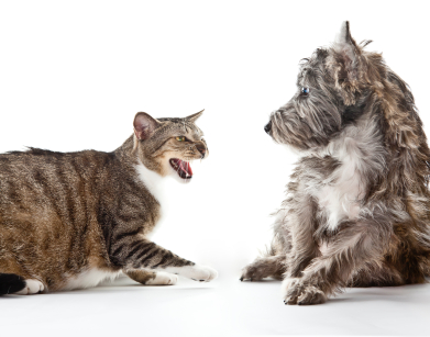 Dogs Aggression Towards Cats