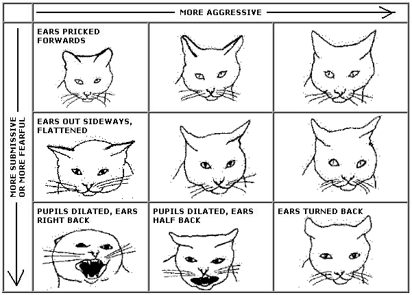 Chart of Cat Facial Body Language