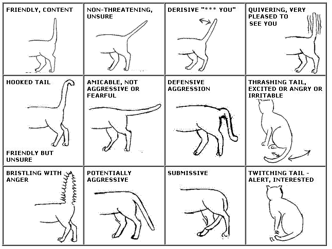 Chart of Cat Tail Body Language