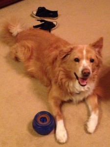 Happy Riley with Toy